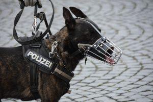 Hundestaffel bei der Polizei